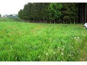 Grundstück, 8323, St. Marein bei Graz