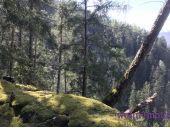 Grundstück, 6405, Pfaffenhofen