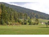 Grundstück, 2763, Pernitz