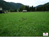 Grundstück, 9565, Reichenau